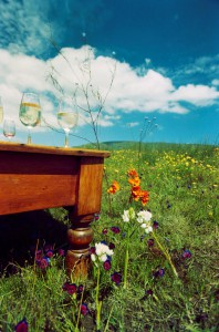 Winetasting in Wildflowers Andrej Brand